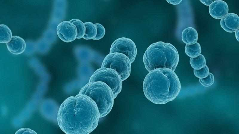 Как лечить кашель от стафилококка?