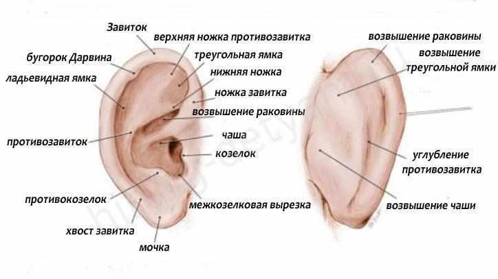 Что делать если болит ухо у ребенка, но без температуры