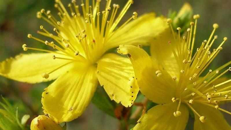 лечение гайморита травами в домашних условиях