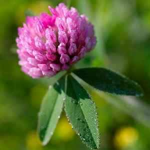 травы от кашля для детей 2-3 лет