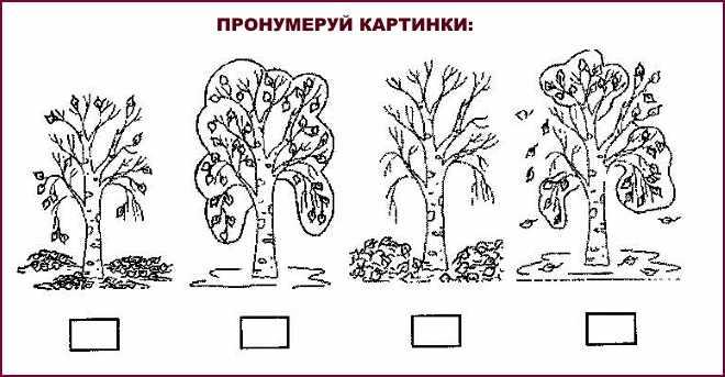 Пронумеруй картинки деревьев