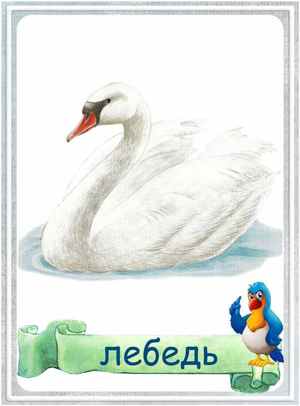 Карточка Лебедь