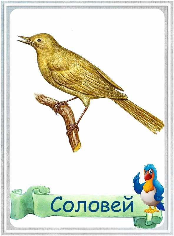 Карточка Соловей