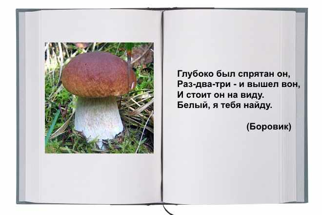Белый гриб закадка