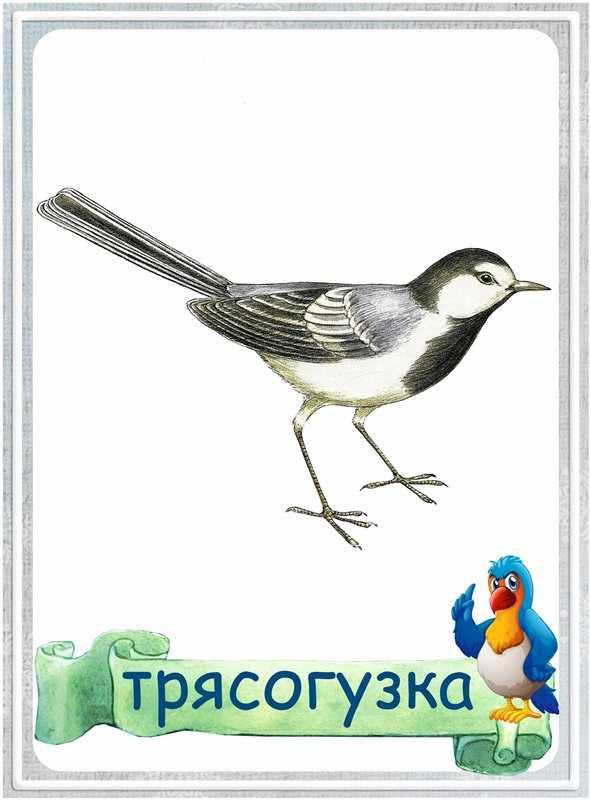 Карточка Трясогуска