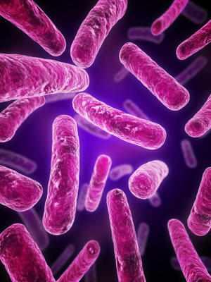 Аугментин убивает грамположительные аэробные бактерии