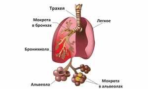 Что происходит в легких при кашле