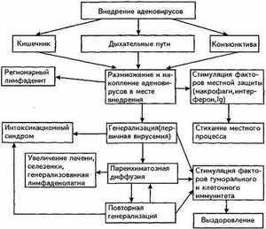 Причины инфекци аденовирусной - наглядная схема